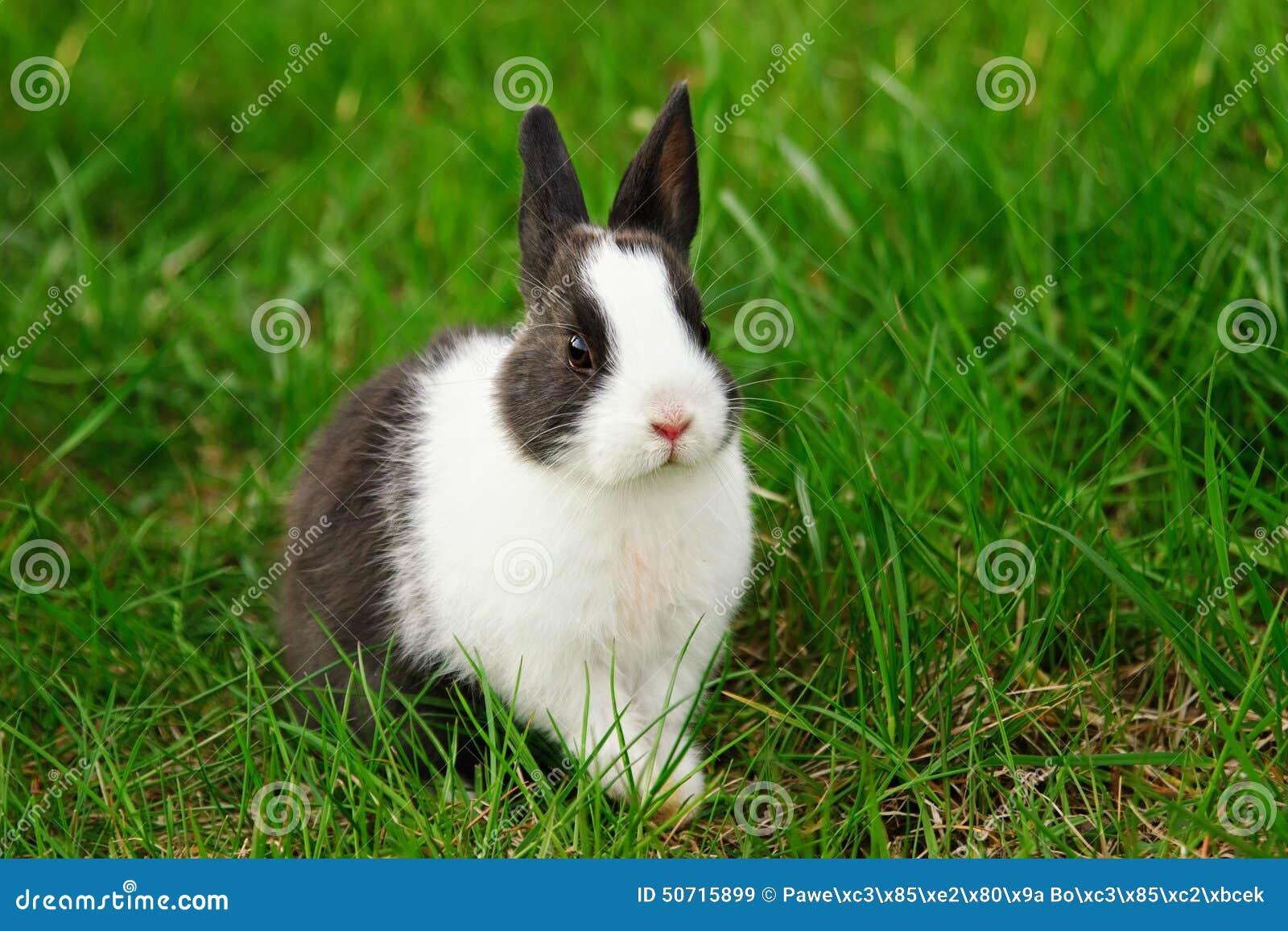 猫咪鹦鹉猫壁纸兔子小猫桌面1300_957变成动物图片