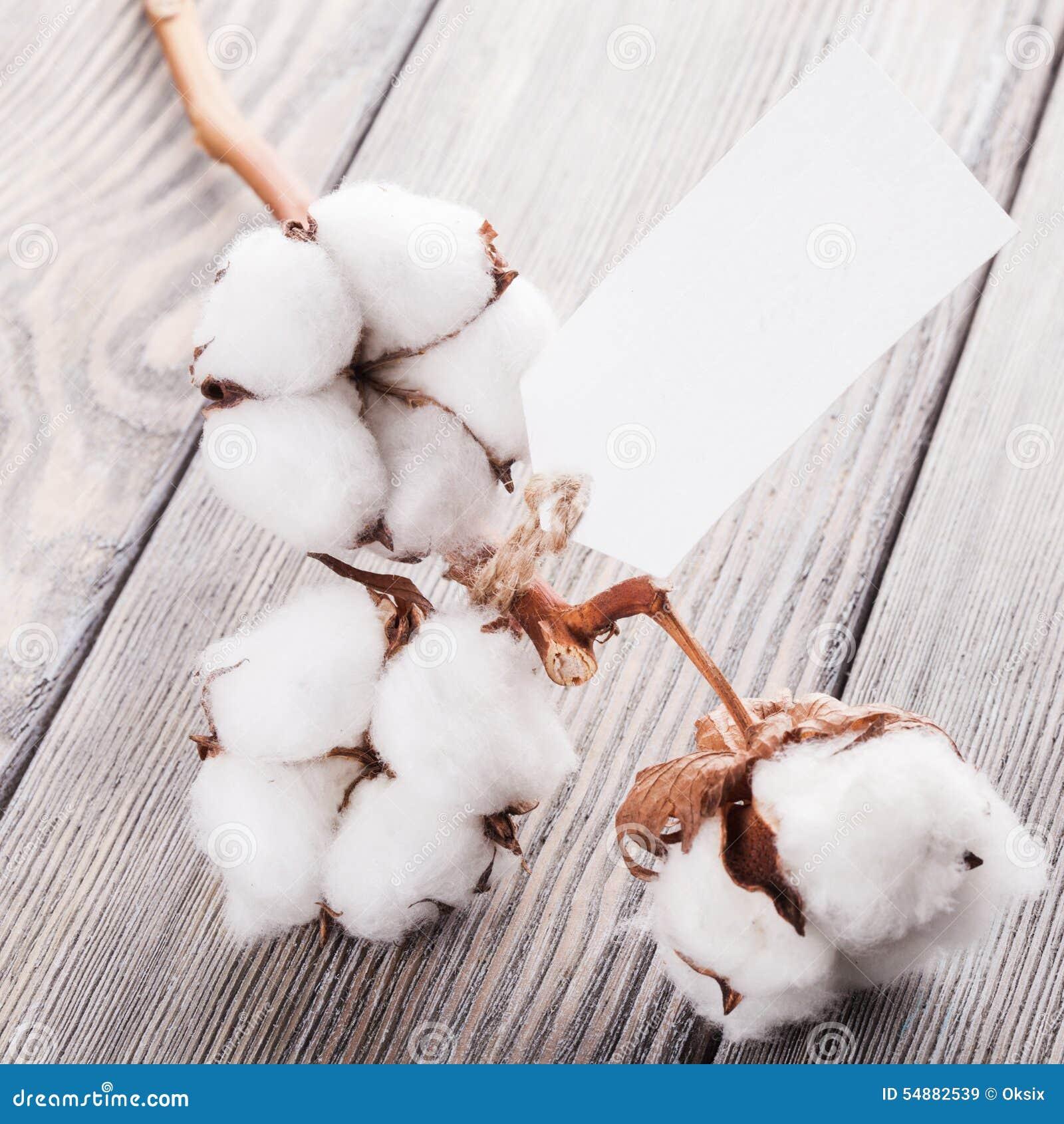 棉花有机纺织品