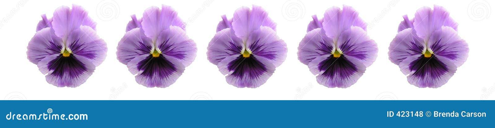 棒查出的蝴蝶花