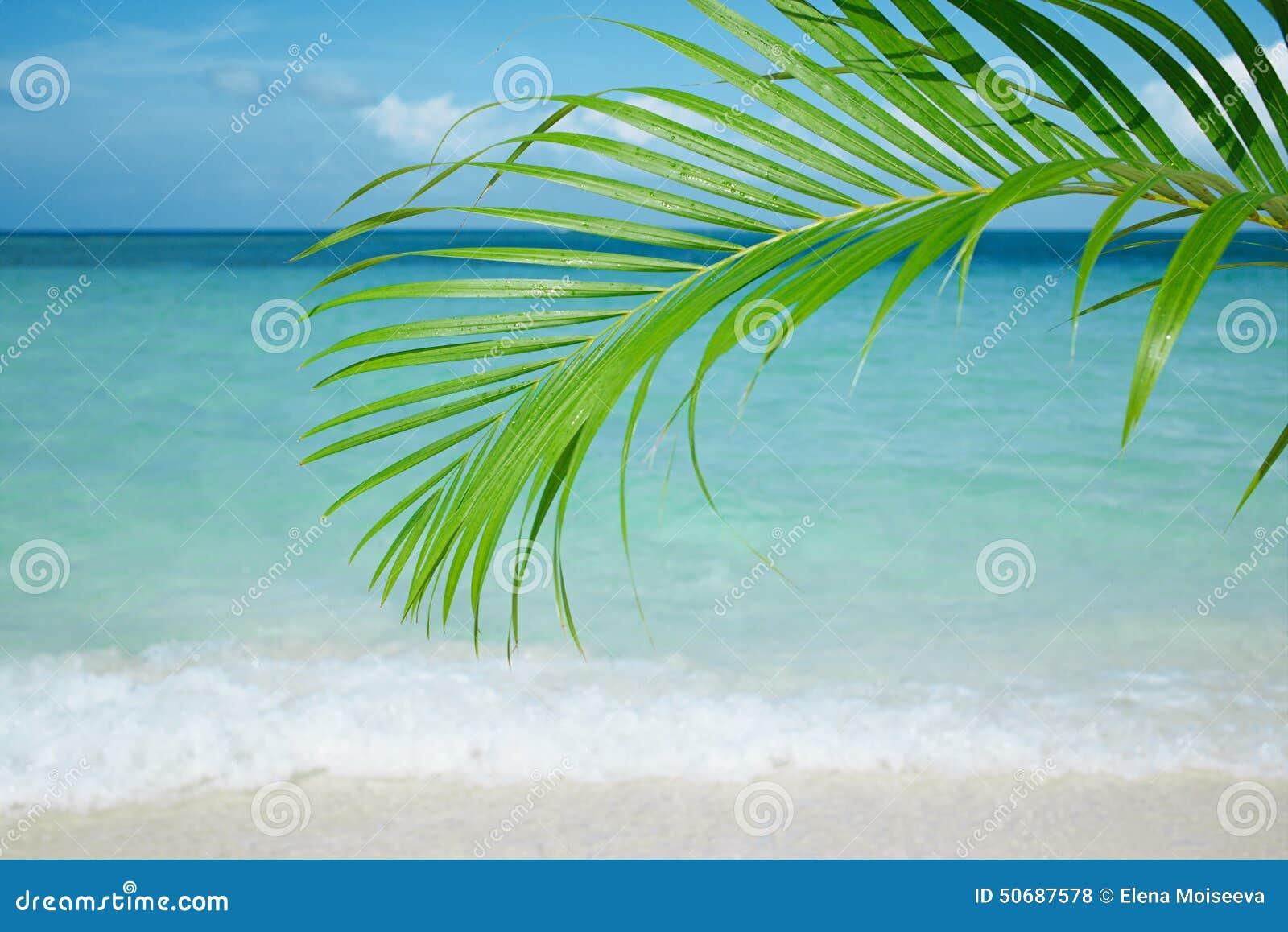 Download 棕榈叶、蓝色海和热带白色沙子靠岸 库存照片. 图片 包括有 古巴, 云彩, 夏天, 晒裂, 抽象, 本质 - 50687578