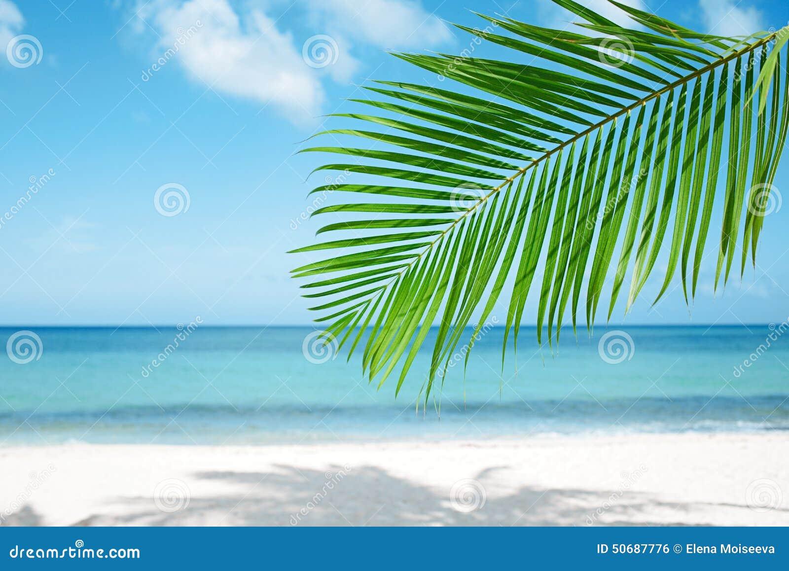 Download 棕榈叶、蓝色海和热带白色沙子靠岸 库存照片. 图片 包括有 ,并且, 掌上型计算机, 沙子, 海岸, 火箭筒 - 50687776