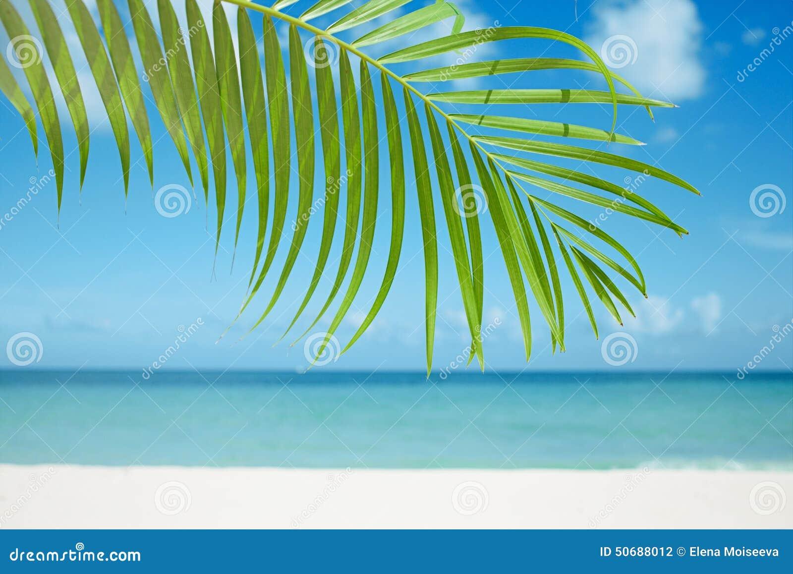 Download 棕榈叶、蓝色海和热带白色沙子靠岸 库存照片. 图片 包括有 古巴, 海岛, 节假日, 盐水湖, 海洋, beautifuler - 50688012
