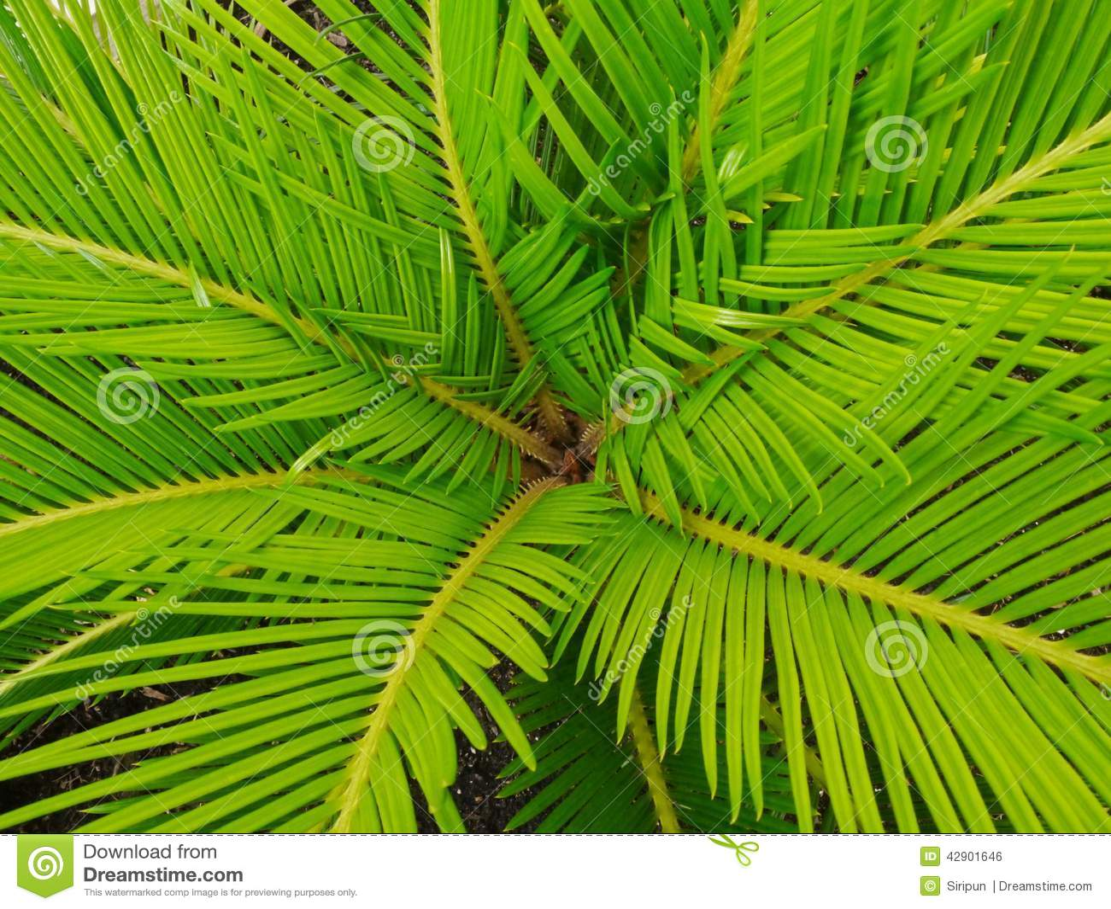 棕榈树棕榈叶叶子.图片