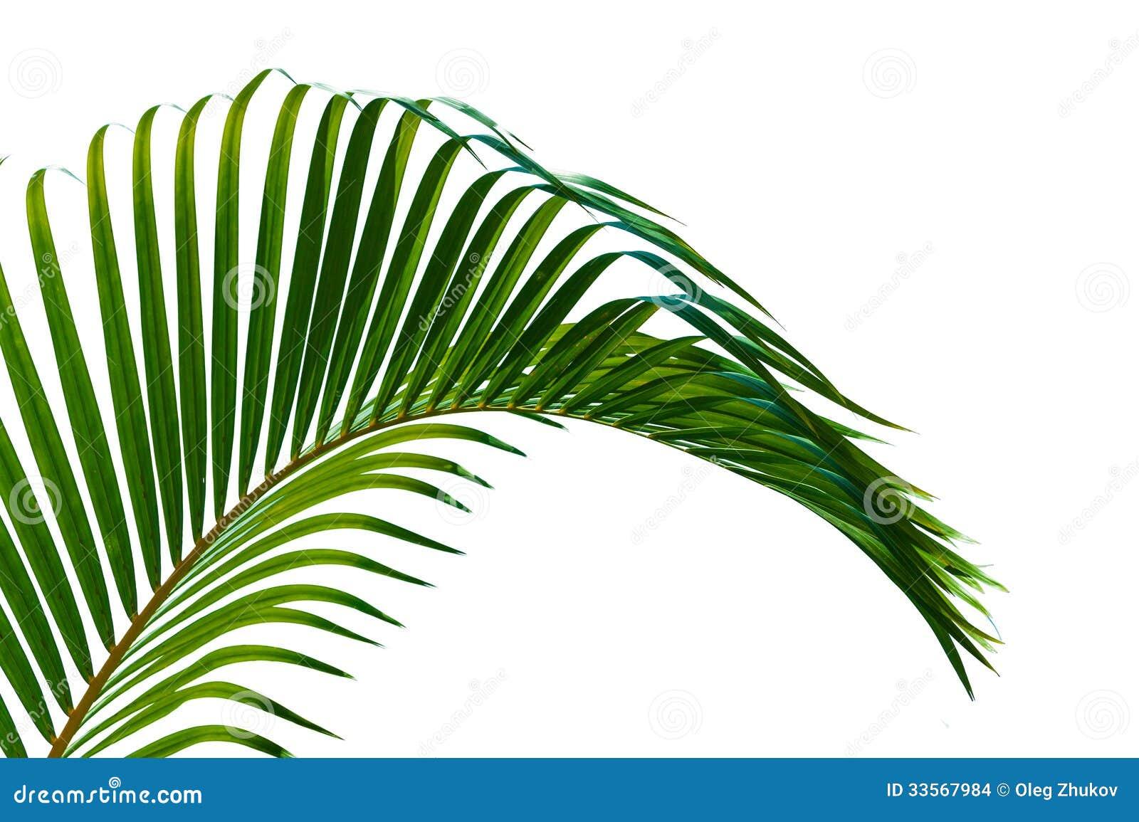 灌木, 特写镜头, 椰子, 卷曲, 曲线, 详细资料, 羽毛似, 植物群, 叶子图片