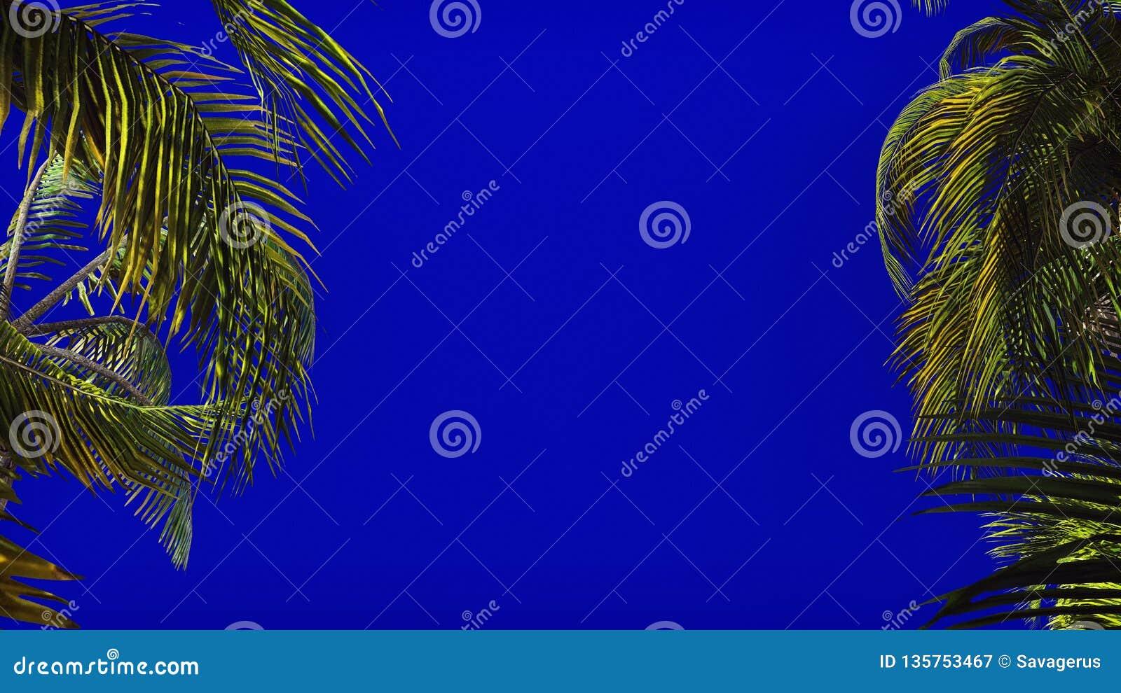 棕榈树分支在风的在蓝色屏幕上 背景美好的例证夏天向量 3d翻译