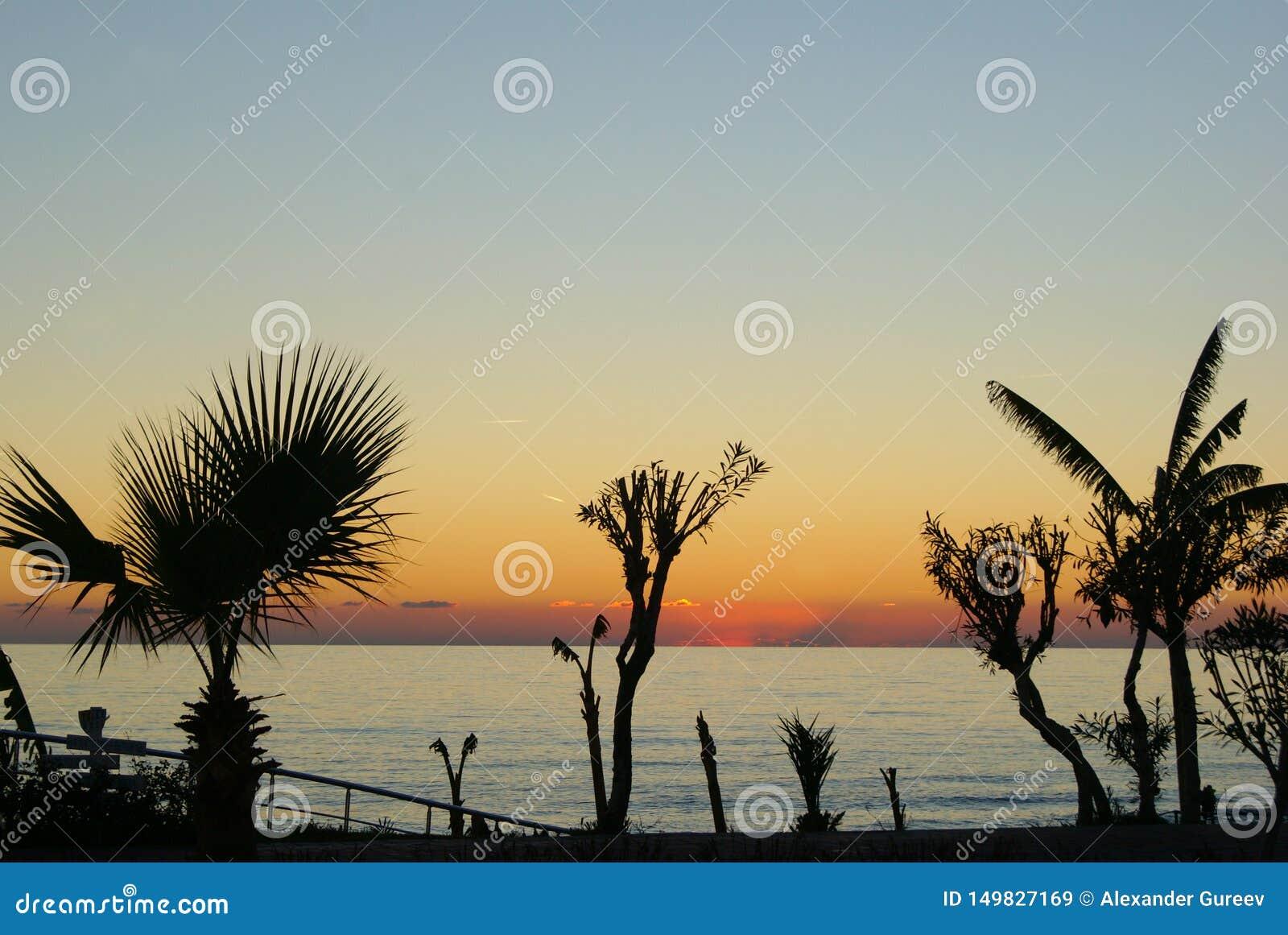 棕榈树剪影反对日落的