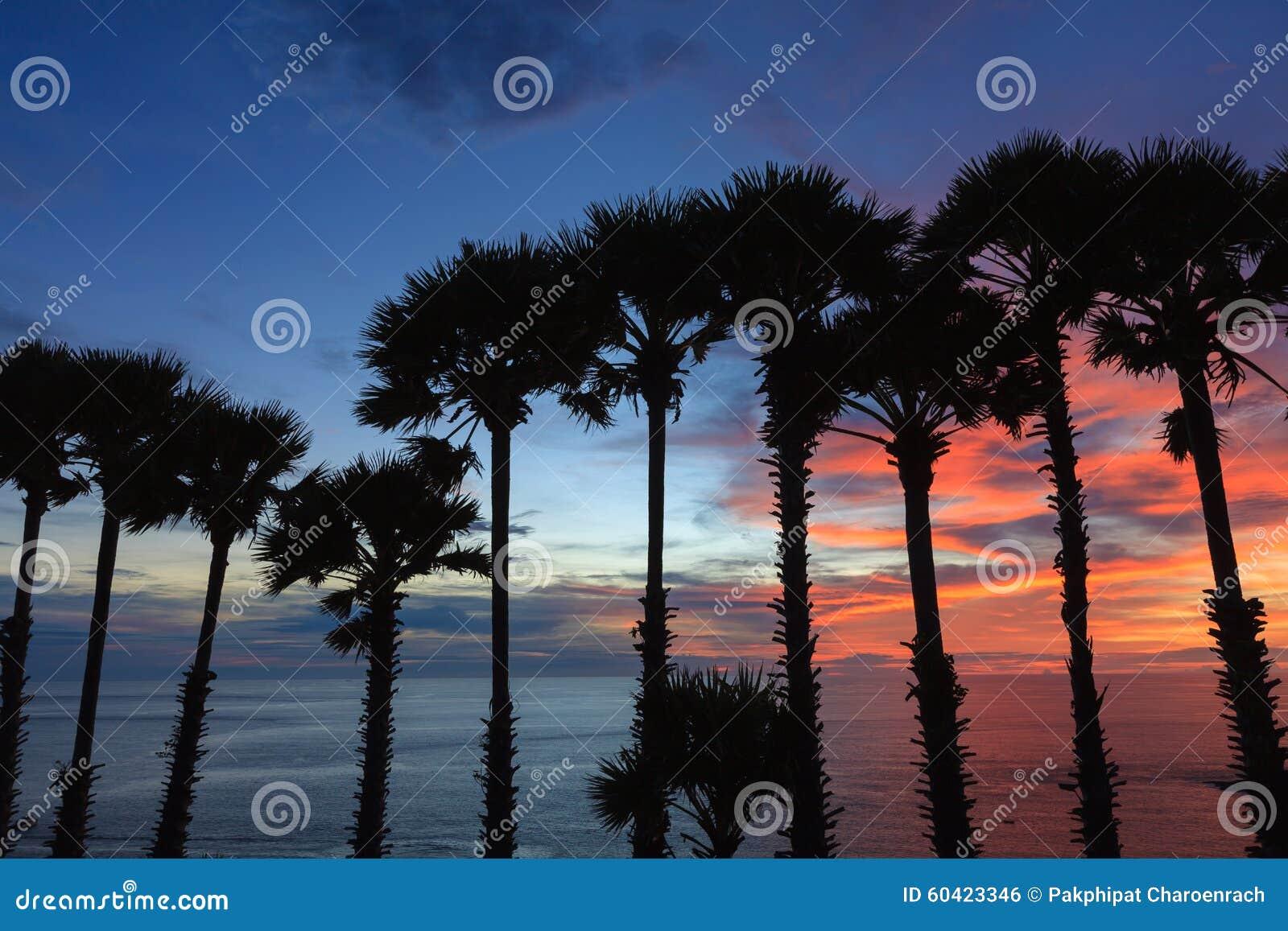 棕榈树剪影树梢在日落期间的