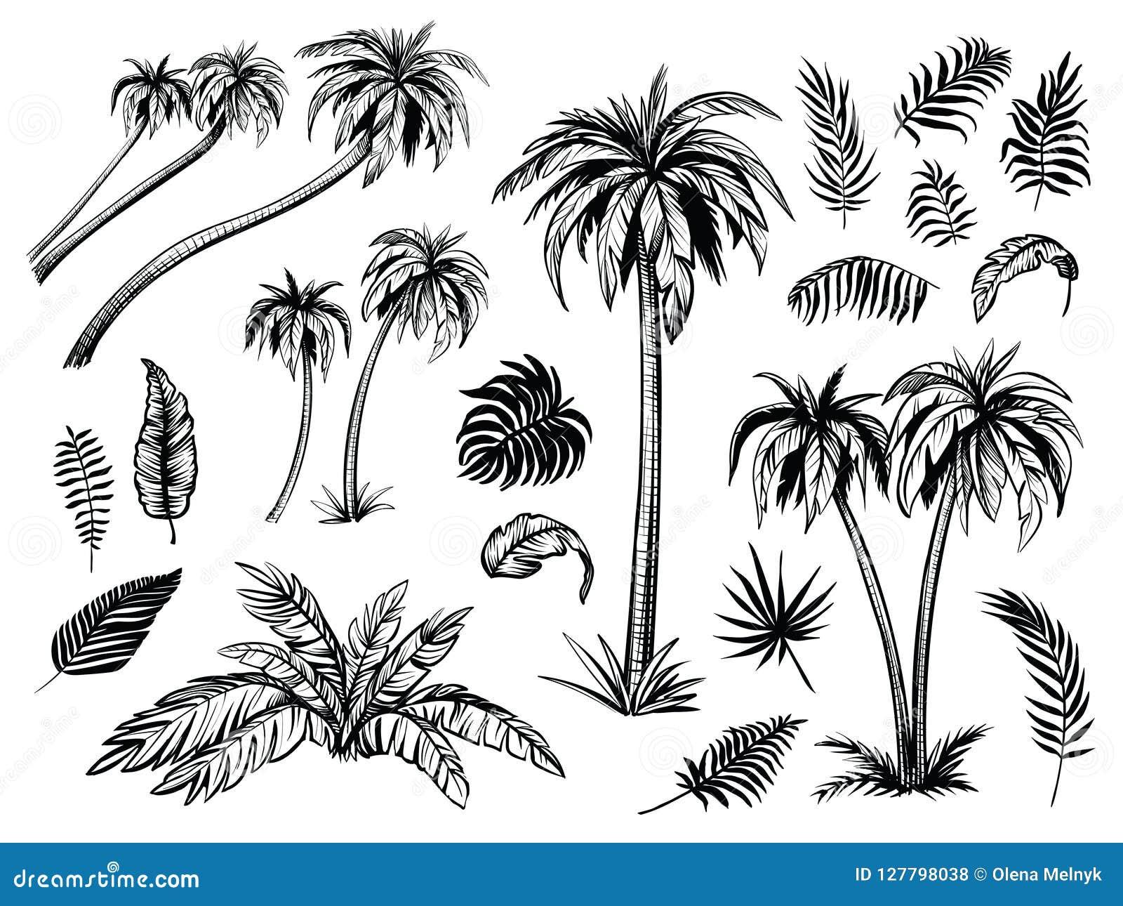 棕榈树和叶子 黑线剪影 传染媒介剪影例证
