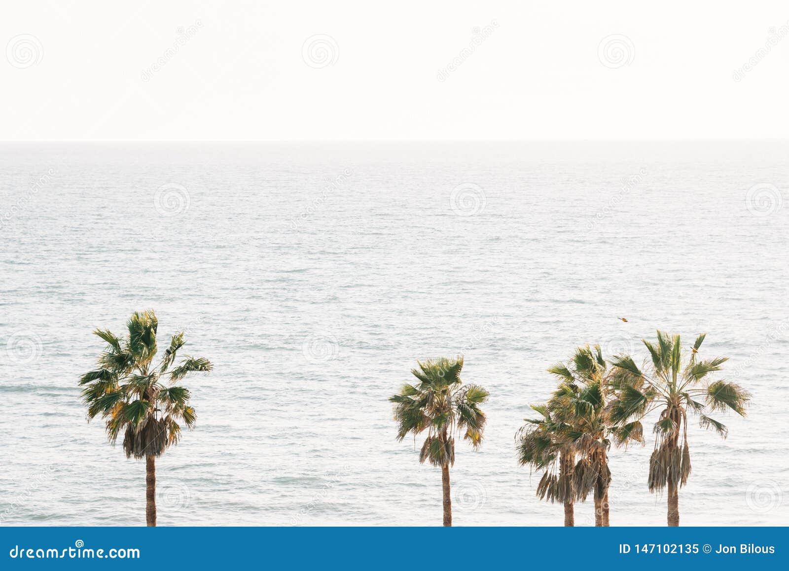 棕榈树和太平洋在圣克莱芒特,橙县,加利福尼亚