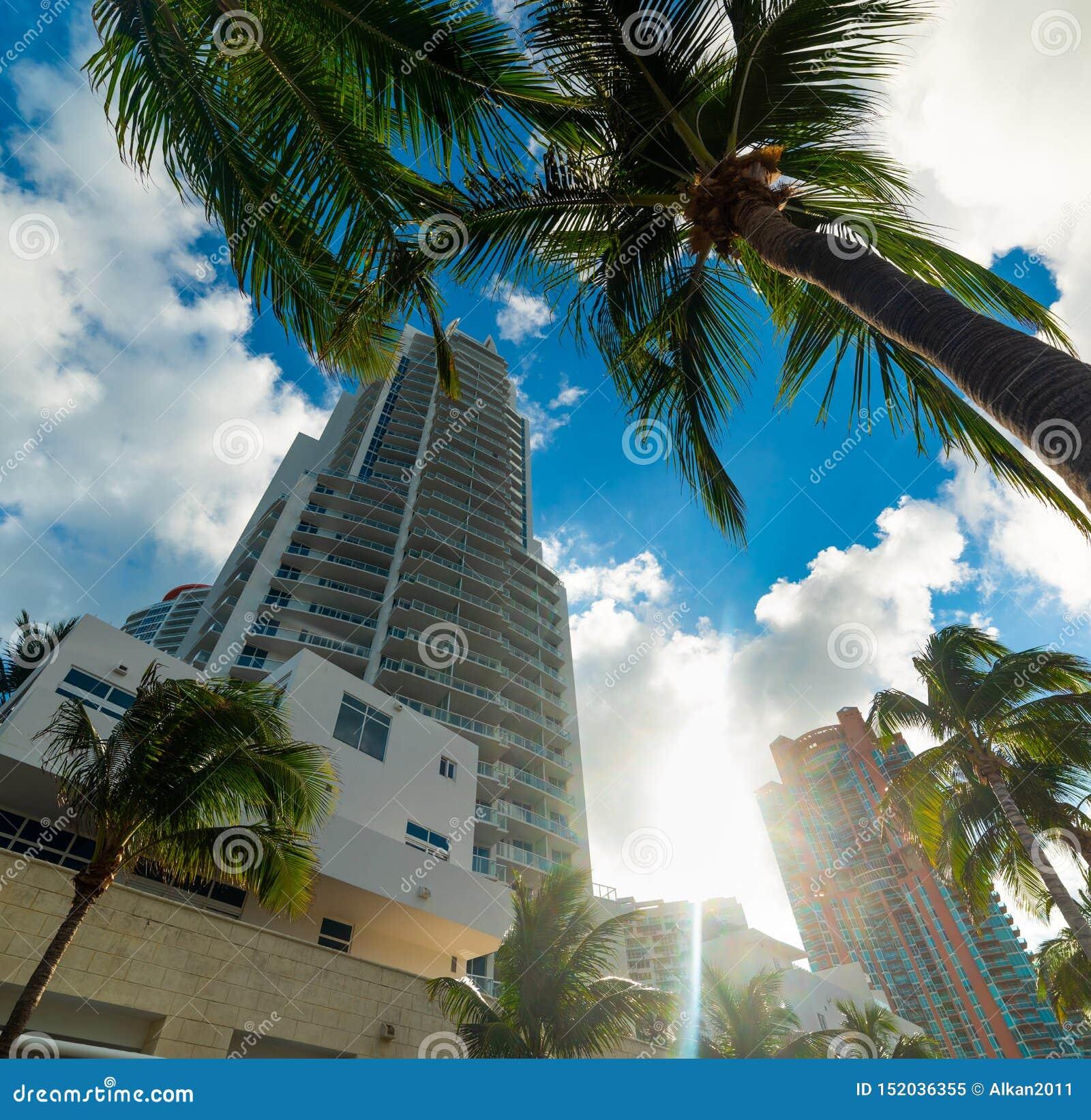 棕榈树和摩天大楼在迈阿密海滩