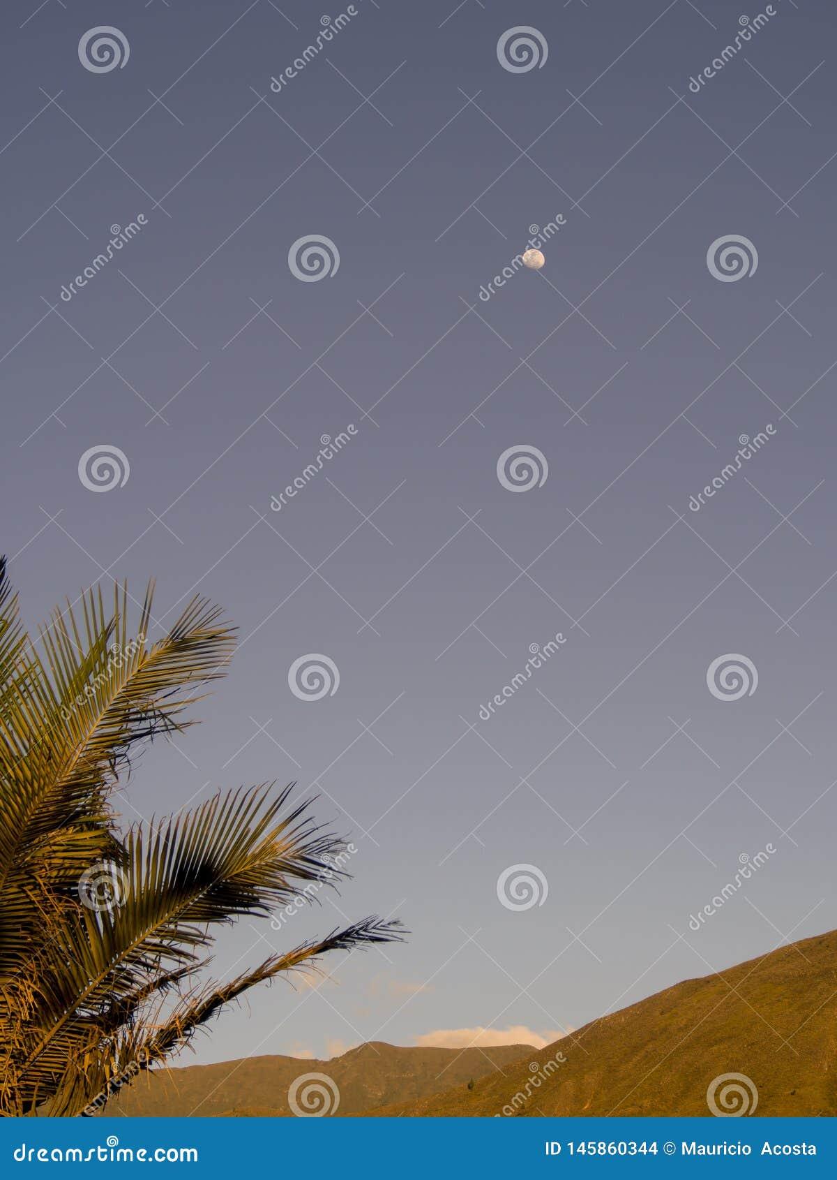 棕榈树离开与月亮在距离-垂直