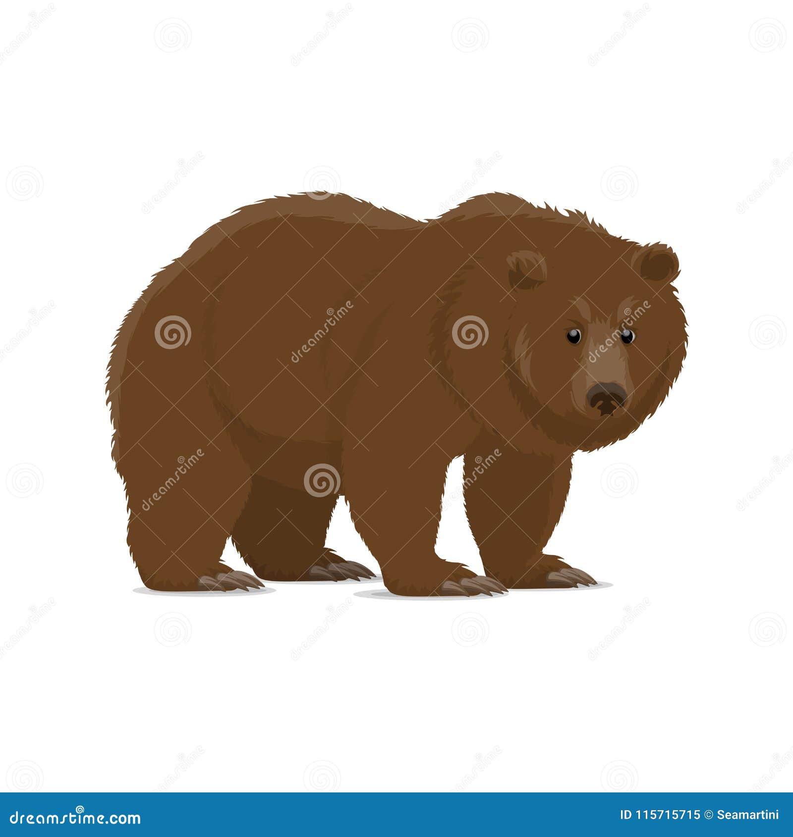 棕熊或狂放的掠食性动物北美灰熊动物象