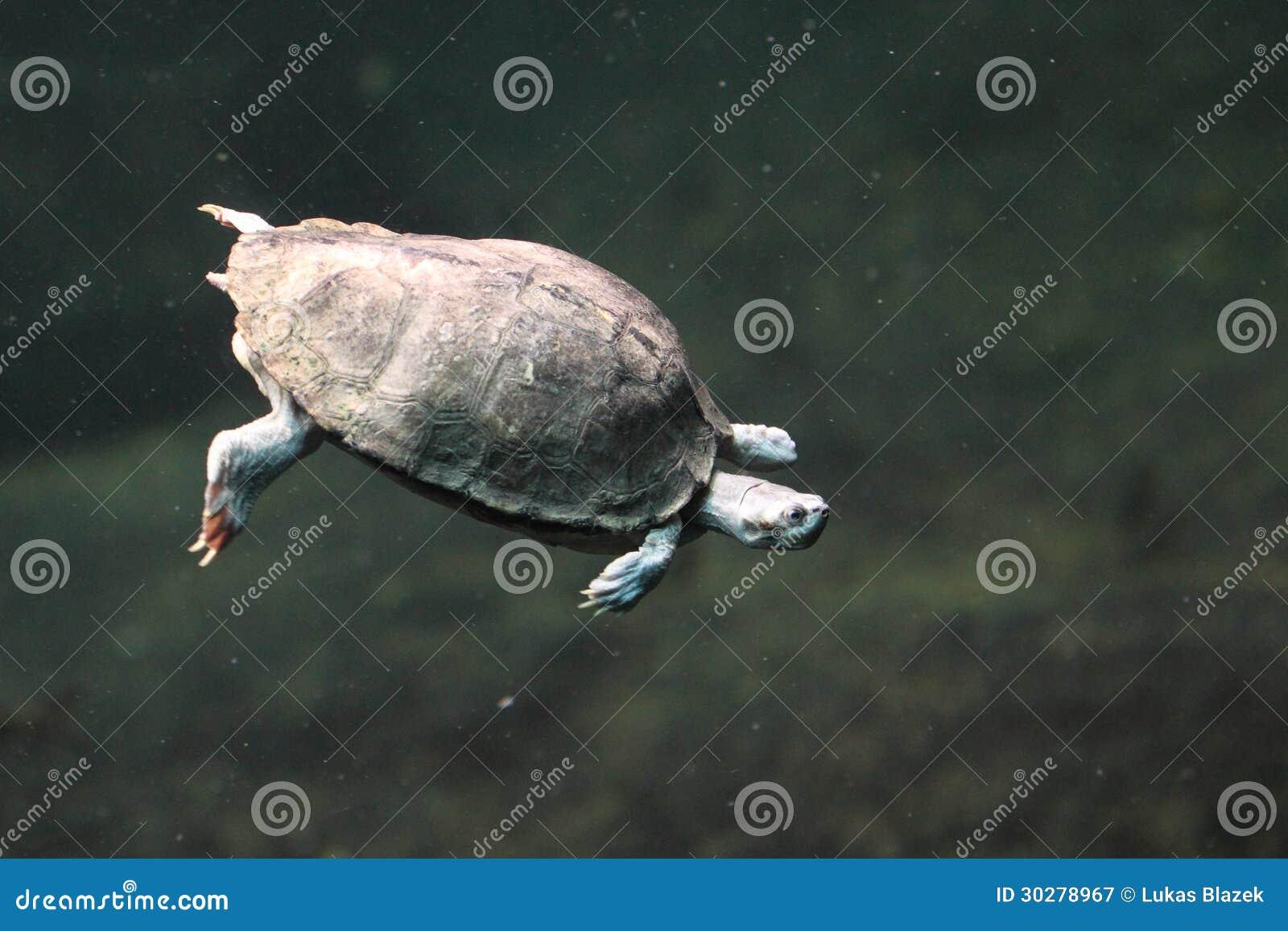 布朗顶房顶了乌龟