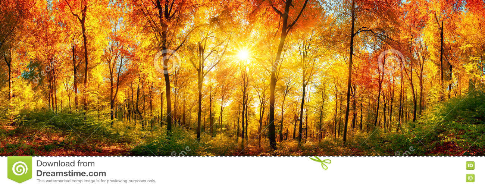 森林全景在秋天