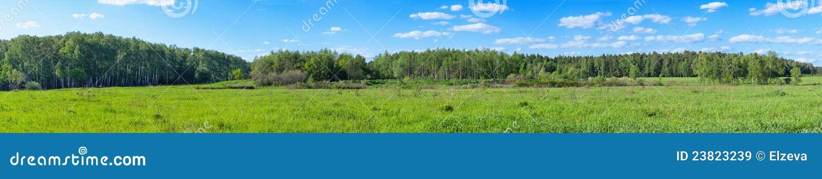 森林全景春天