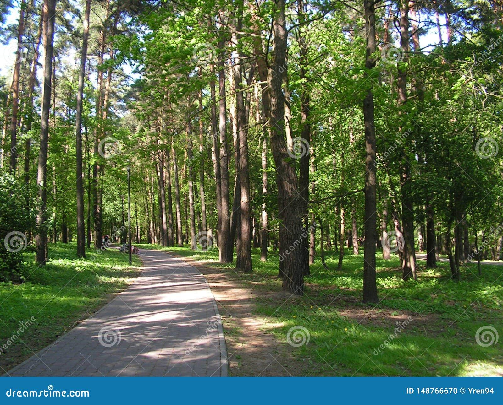 7 森林公园'DROZDY'在米斯克白俄罗斯