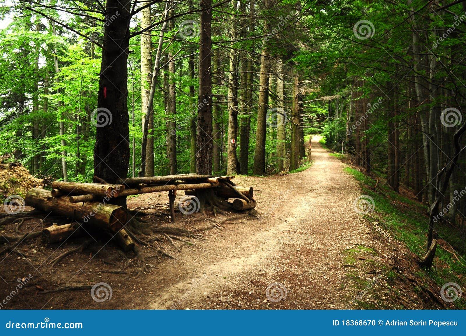 森林公路可怕夏天图片