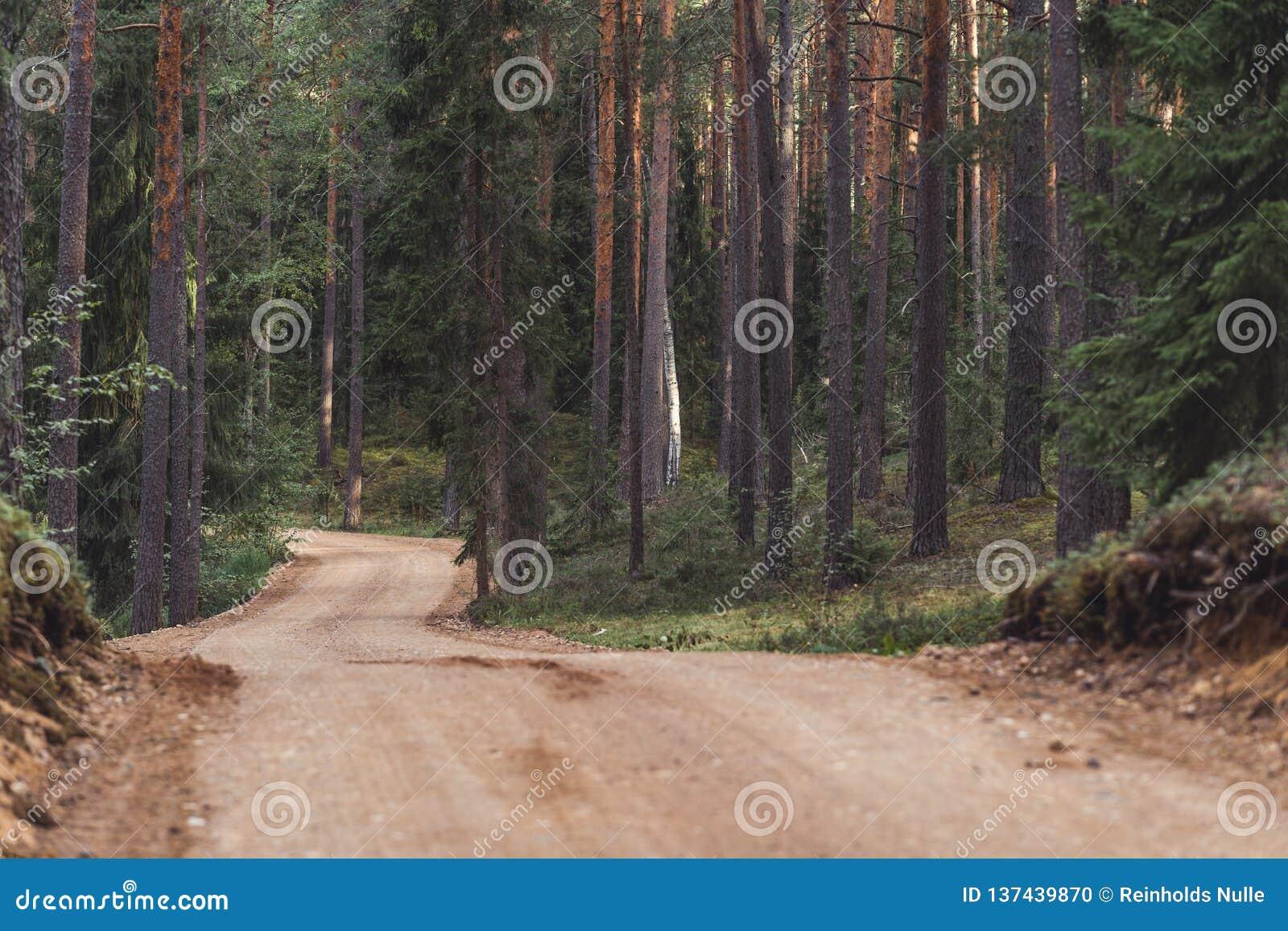 森林公路旅游远足的道路的看法,朝向更深在森林在晴朗的夏日,部分模糊的照片以自由