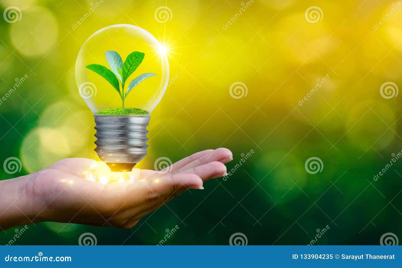 森林和树在光 环境保护和全球性变暖的概念种植增长的里面灯bul