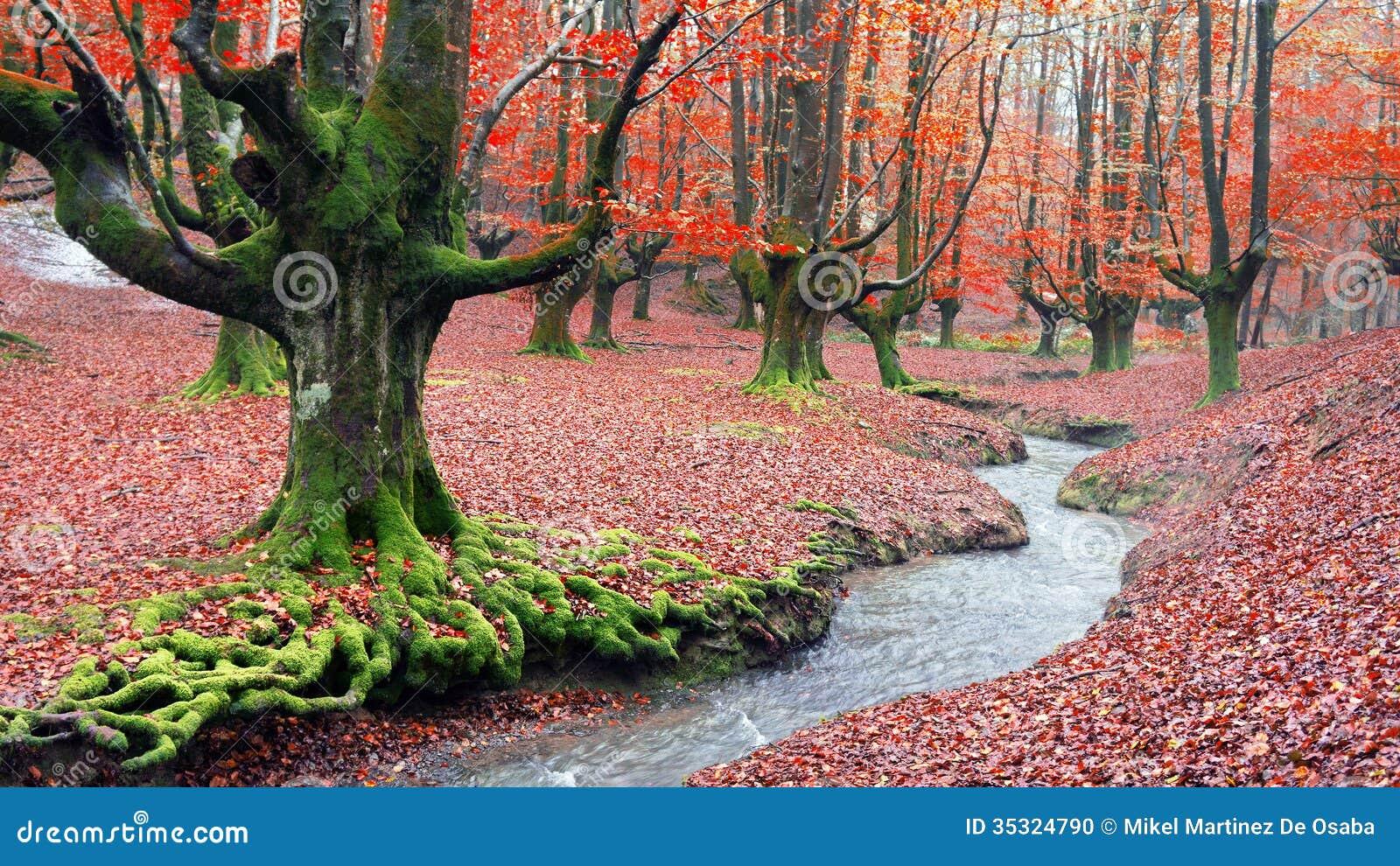 森林在与小河的秋天
