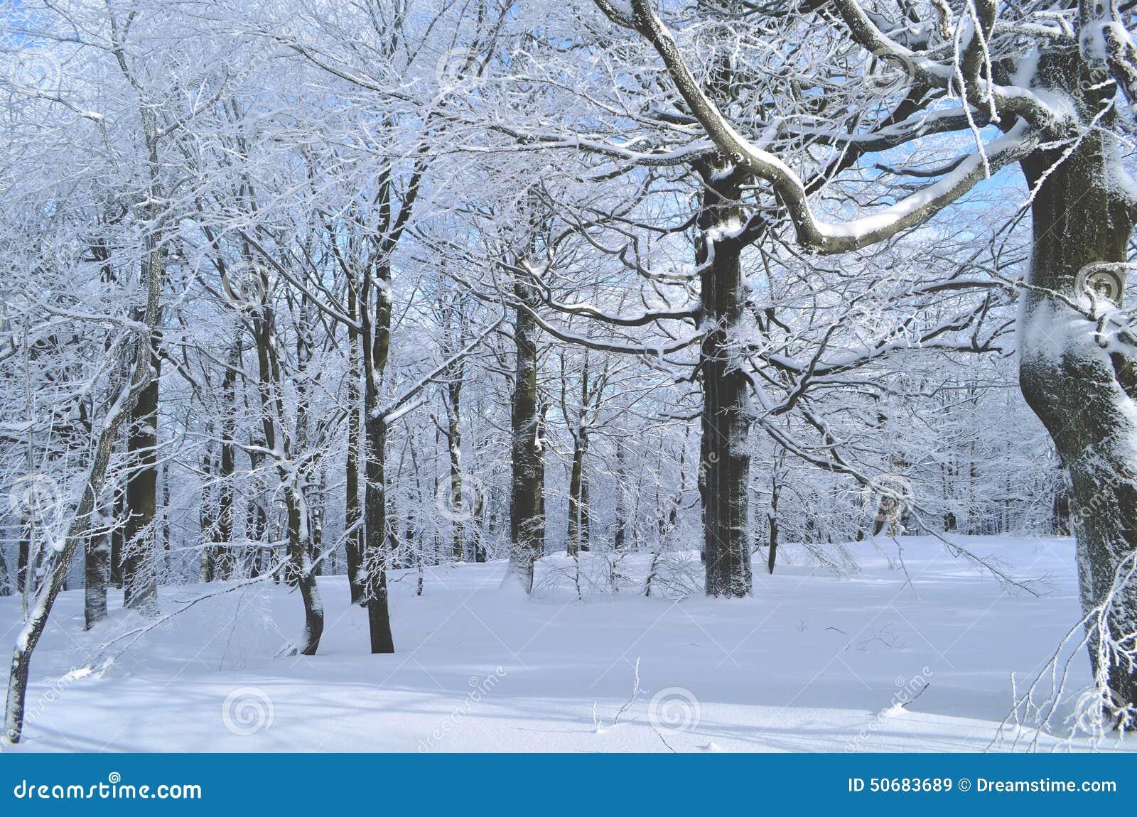 Download 森林在冬天 库存图片. 图片 包括有 下落, 起泡的, 行程, 白兰地酒, 形状, 其它, 航空, 岩石 - 50683689