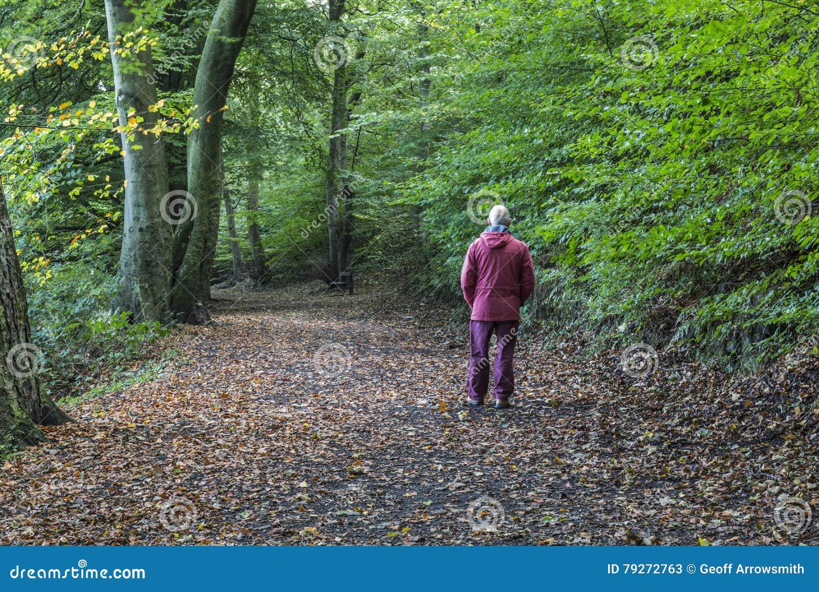 森林地道路的步行者在雏菊角落国家公园