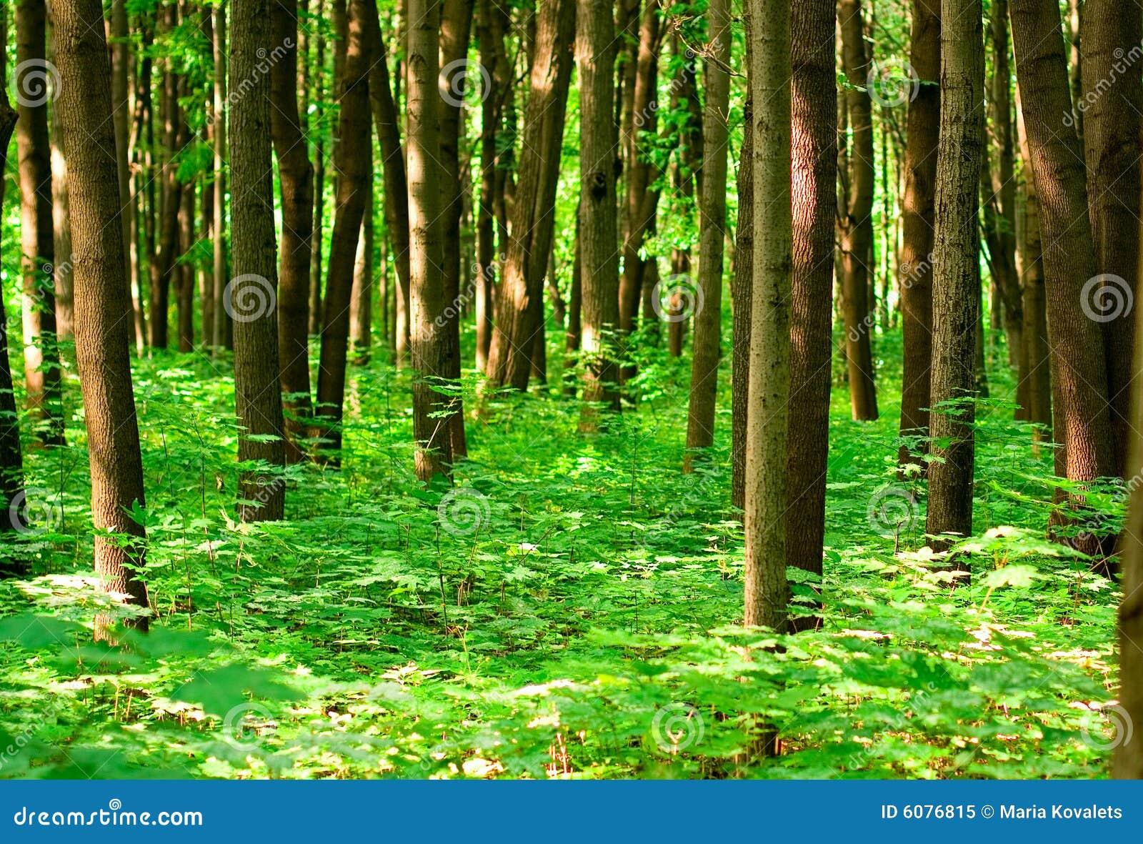森林夏天图片