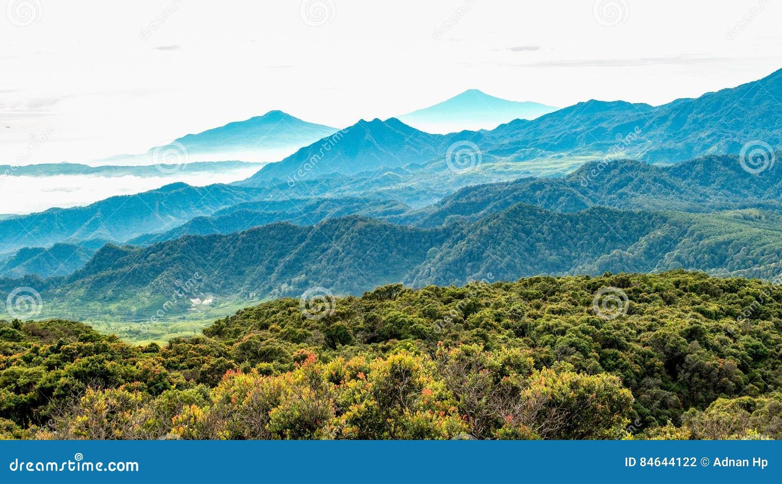 森林大区域鸟瞰图,跟随由有薄雾的小山和