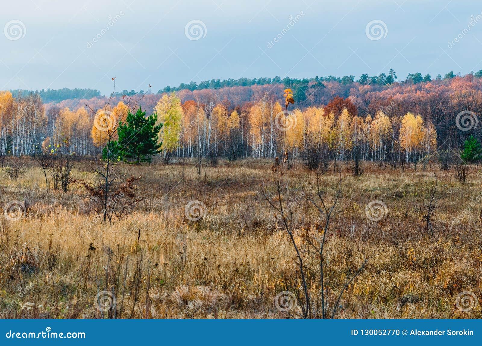 森林干草原区域洪泛区草甸
