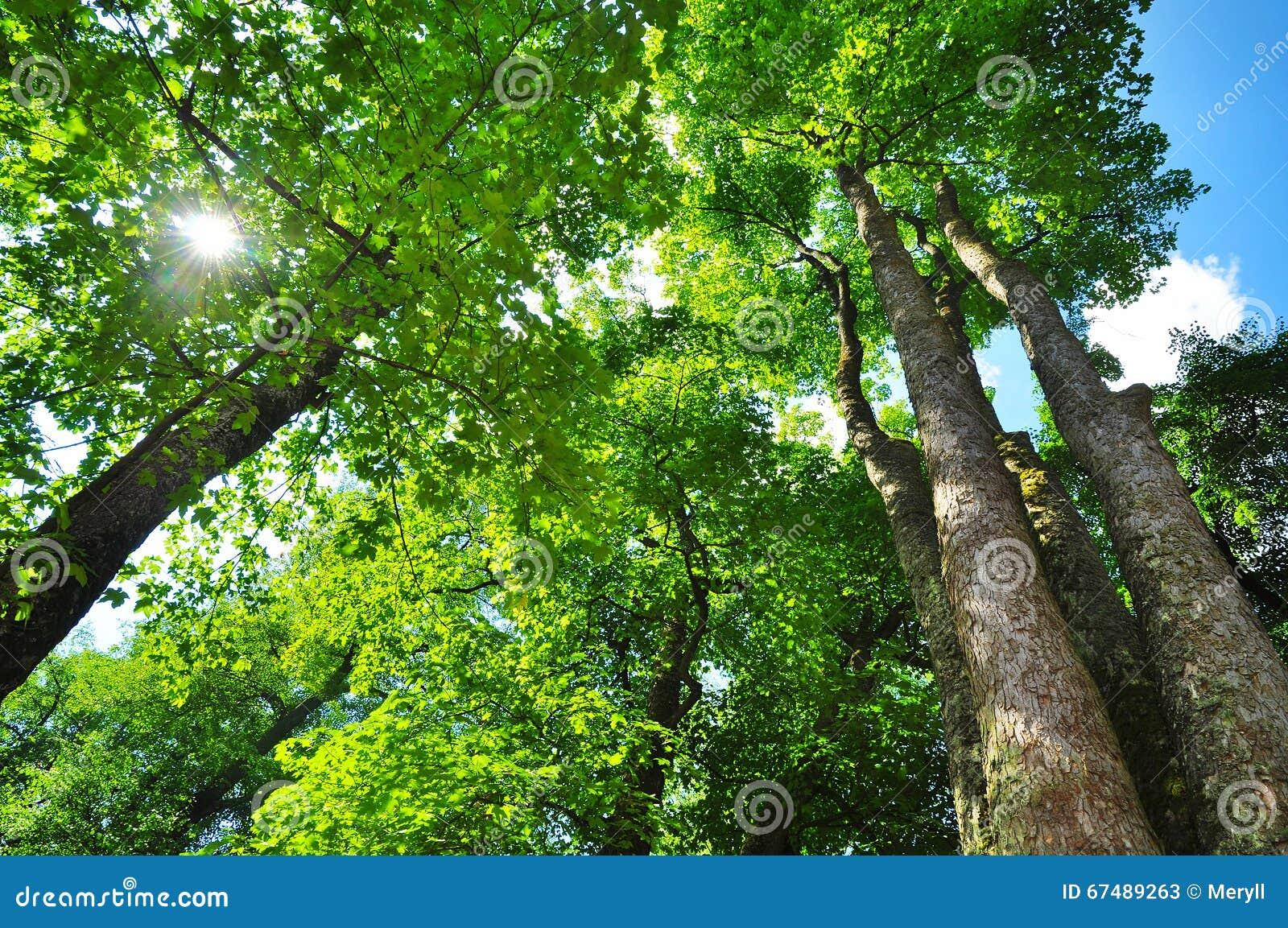 森林生态系