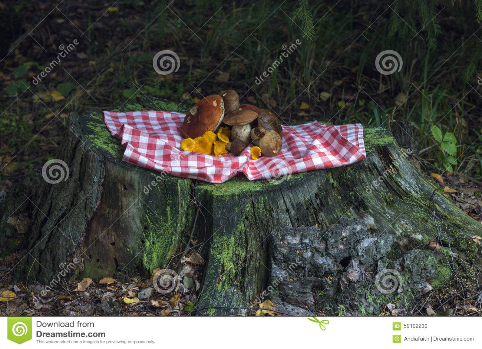 森林礼物概念 蘑菇的图象在树桩的