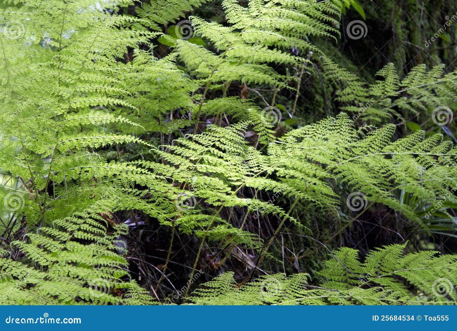 森林种植热带图片