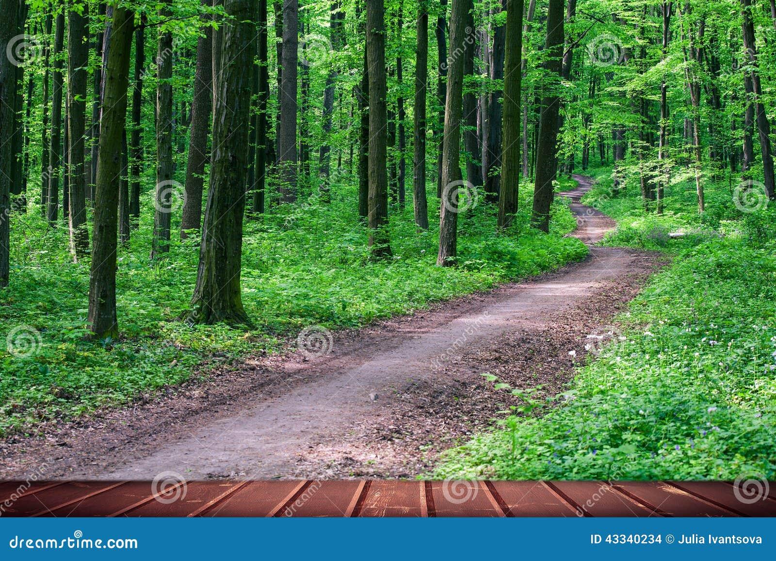 森林背景图片