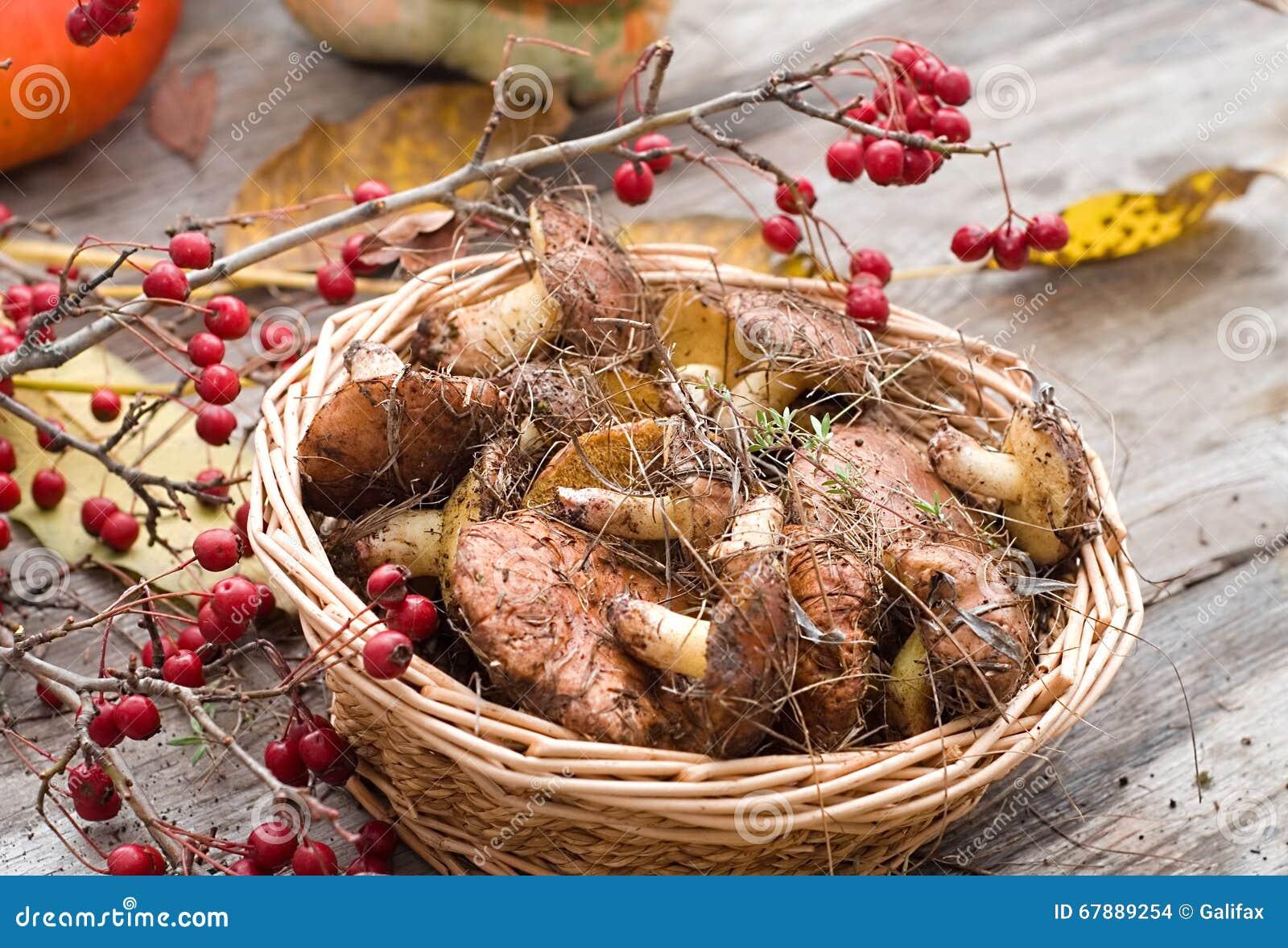 森林蘑菇的混合