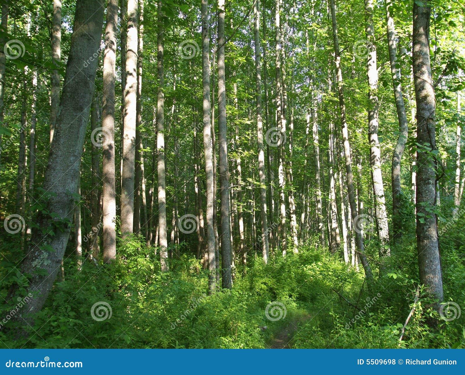森林马里兰结构树