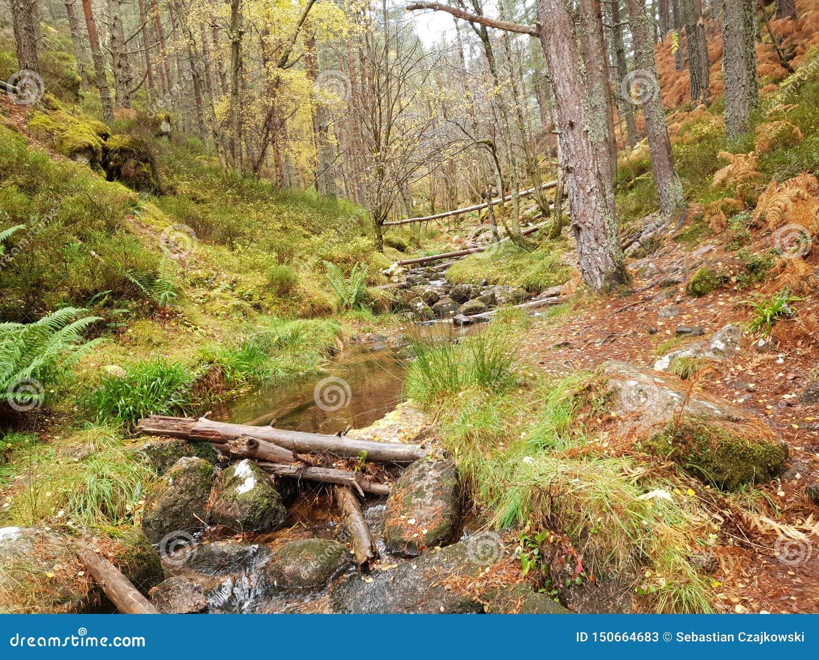 森林bacground自然