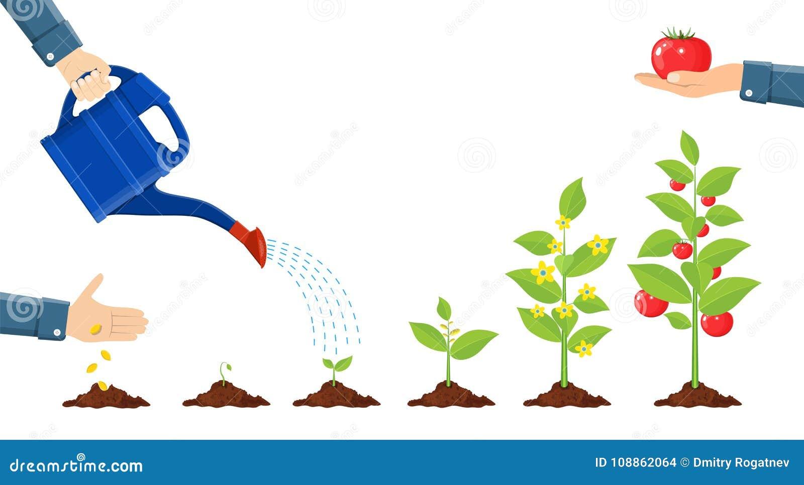植物生长需要哪些因素 植物生长因素花鸟鱼虫植物学图片