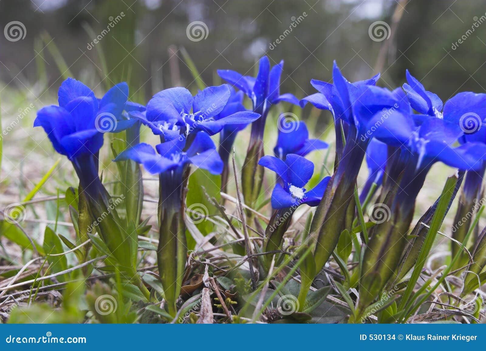 Download 植物春天 库存照片. 图片 包括有 verna, 室外, 宏指令, 白垩, 危及, 小山, 特写镜头, 土壤 - 530134
