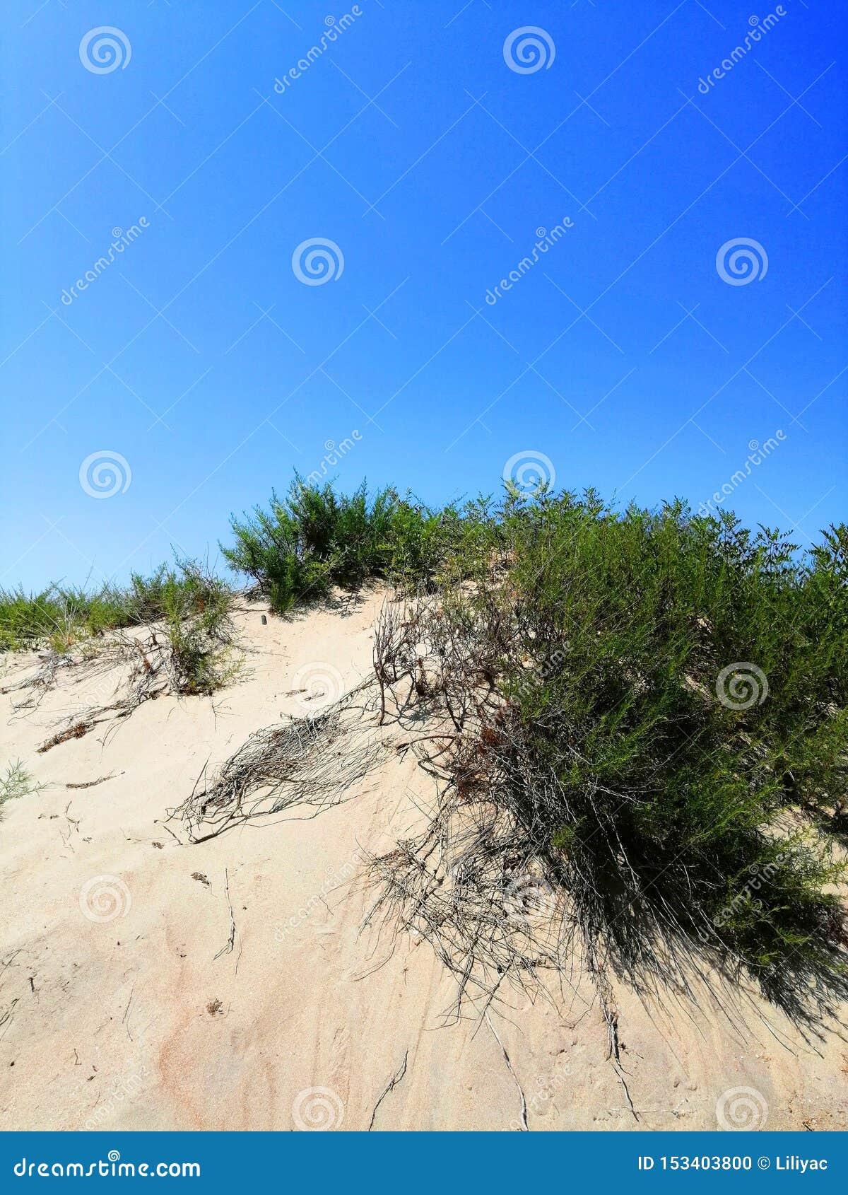 植物沙子的和反对天空