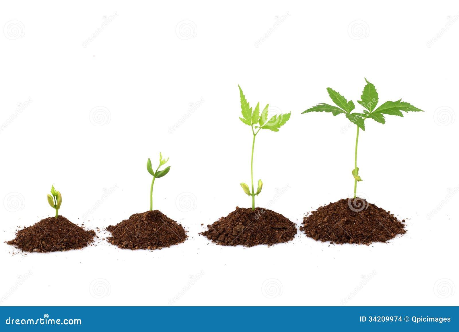 植物生长阶段-植物进展图片