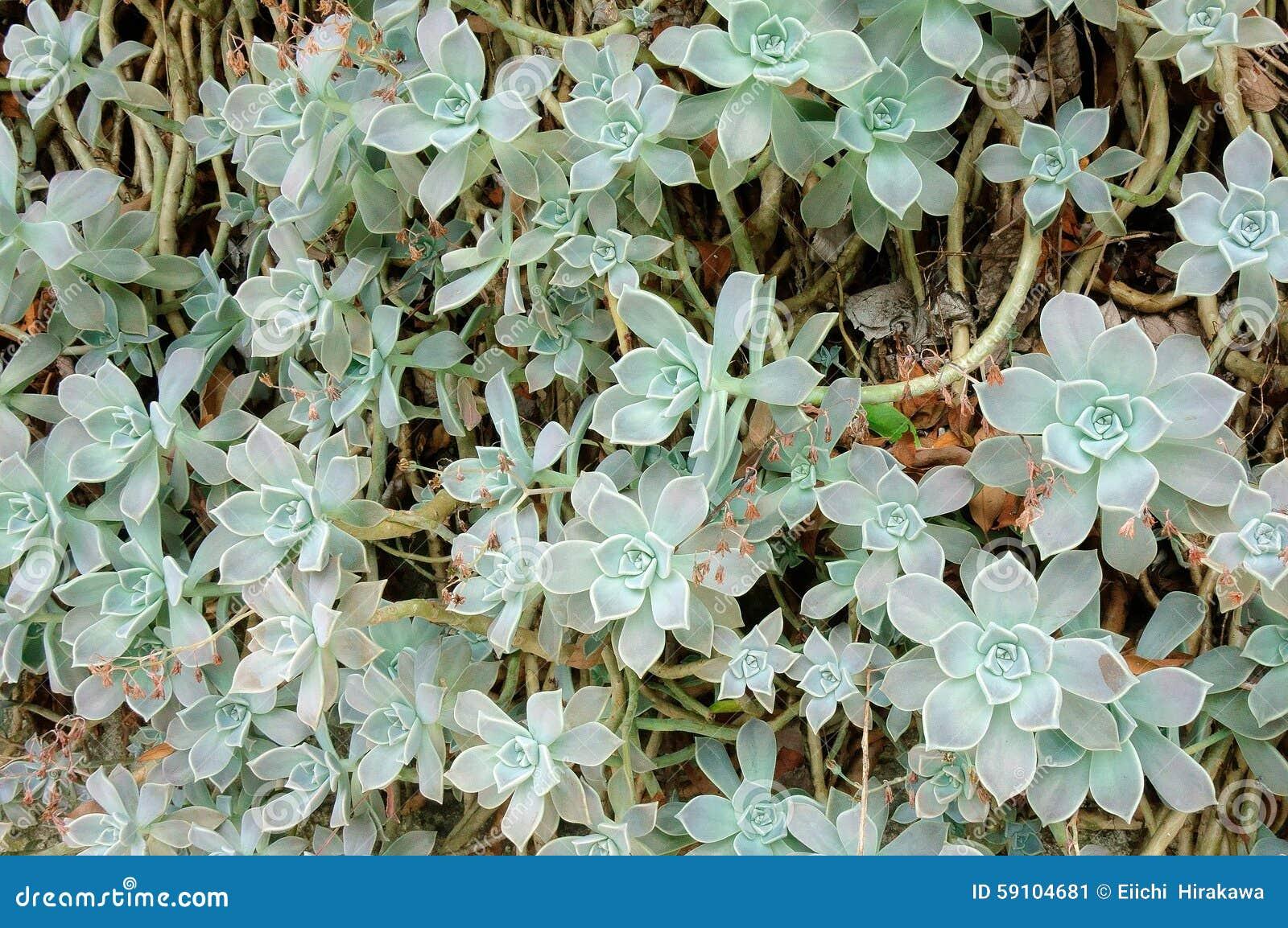 植物的墙壁