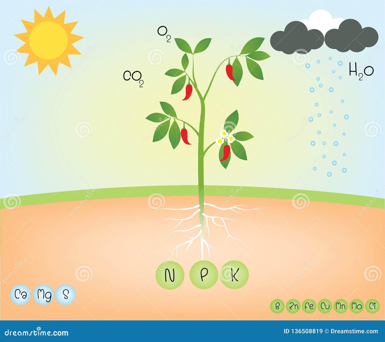 植物的营养素
