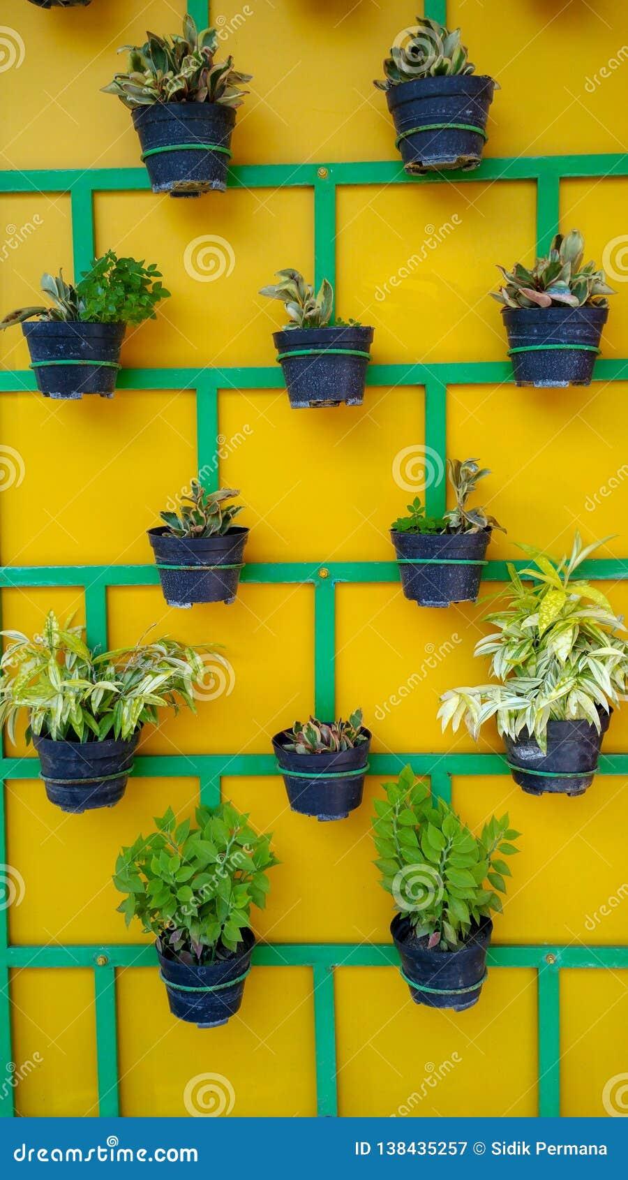 植物罐的布局在墙壁上