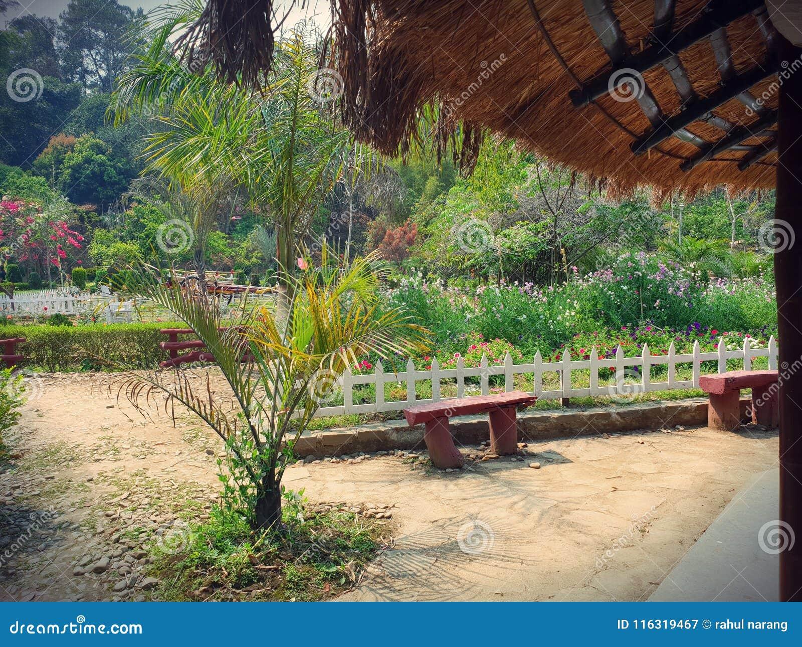 植物群和动物区系在安菲 Awangchein庭院