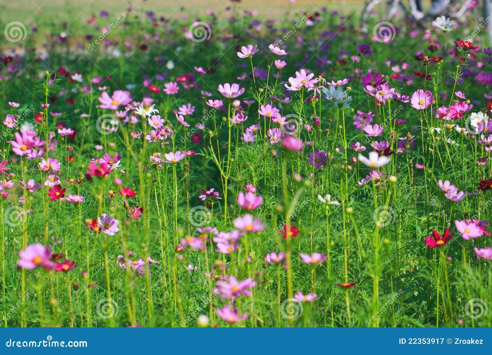 植物群庭院