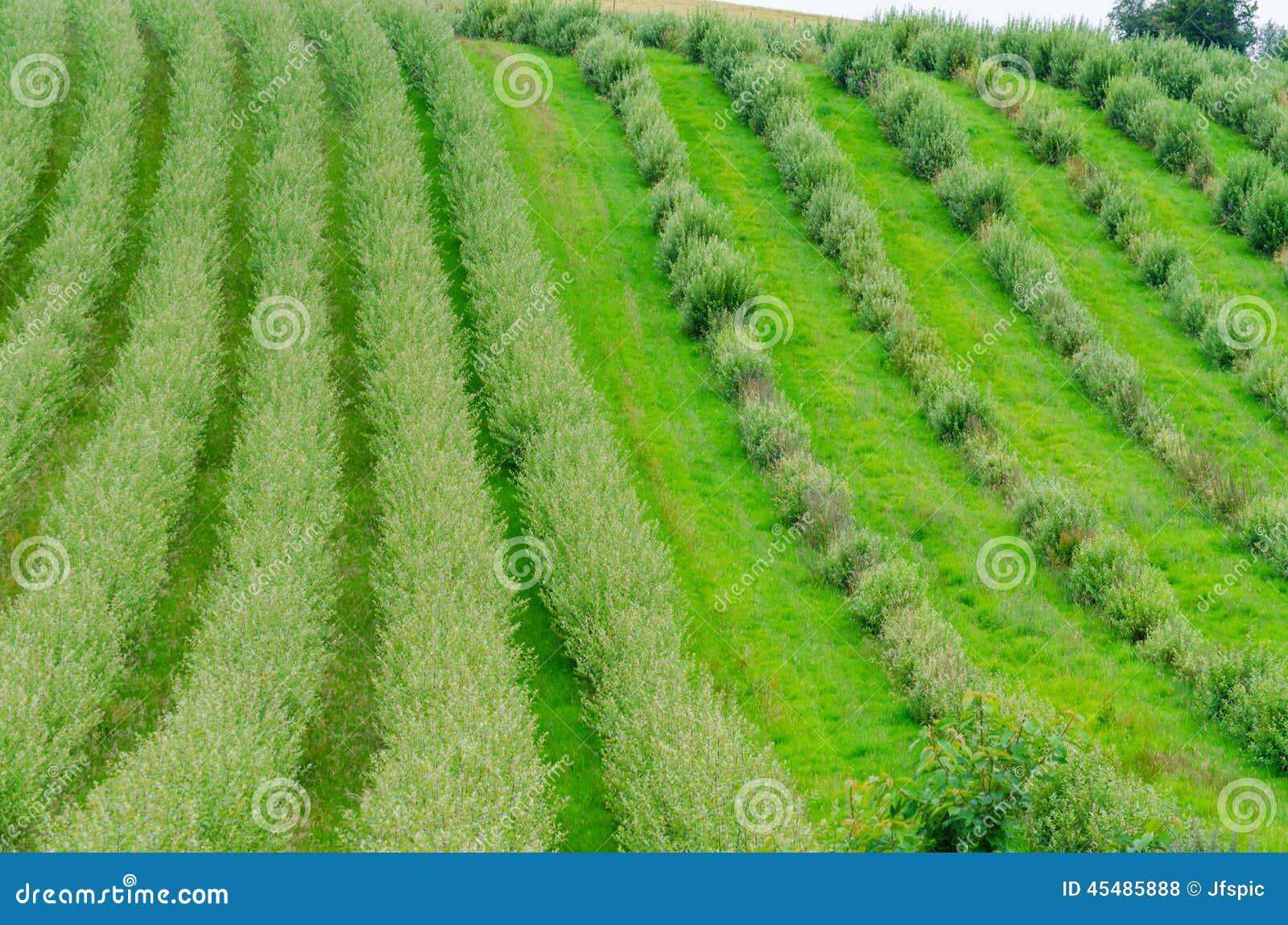 植物,行,苗圃场