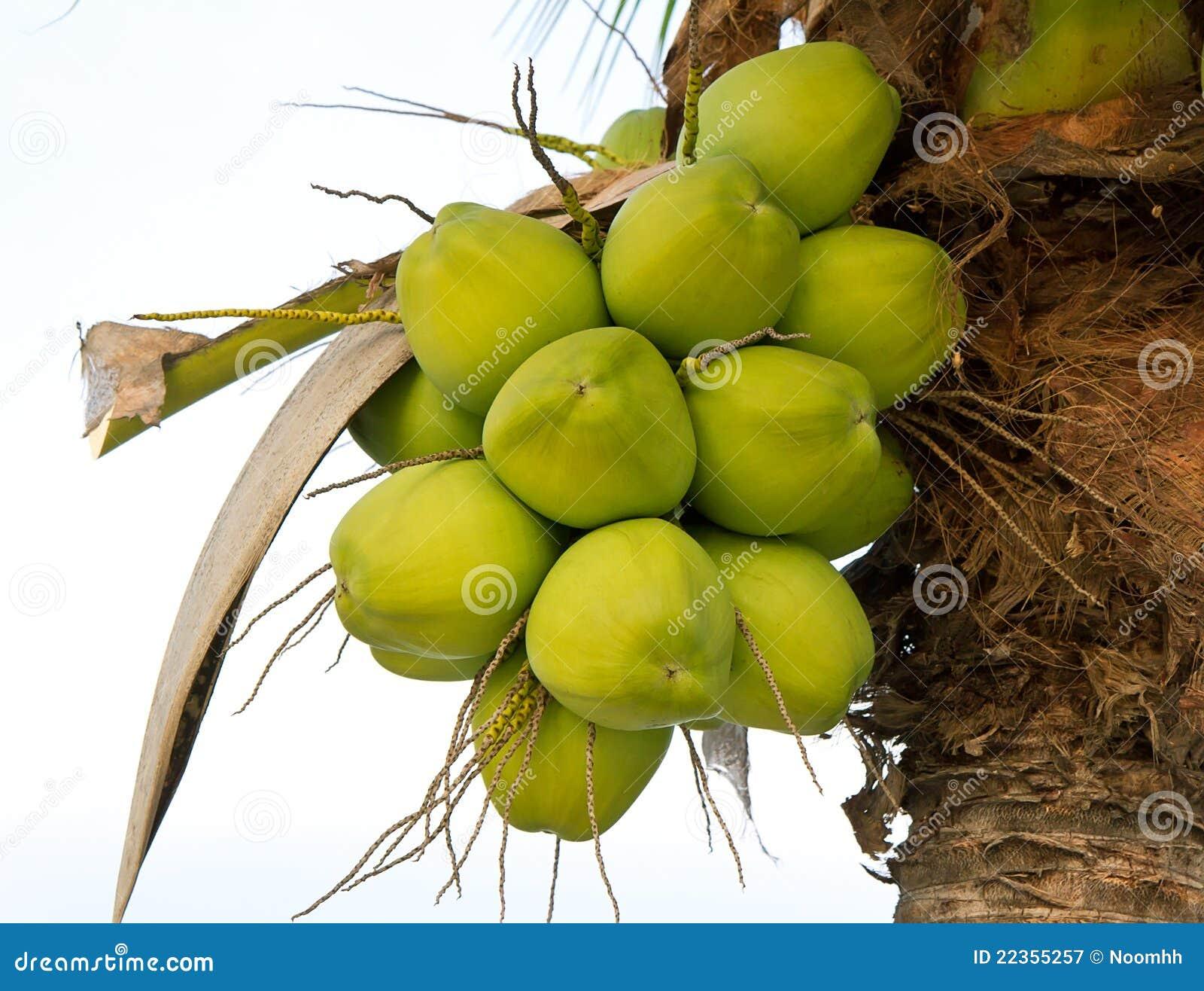 椰子绿色结构树