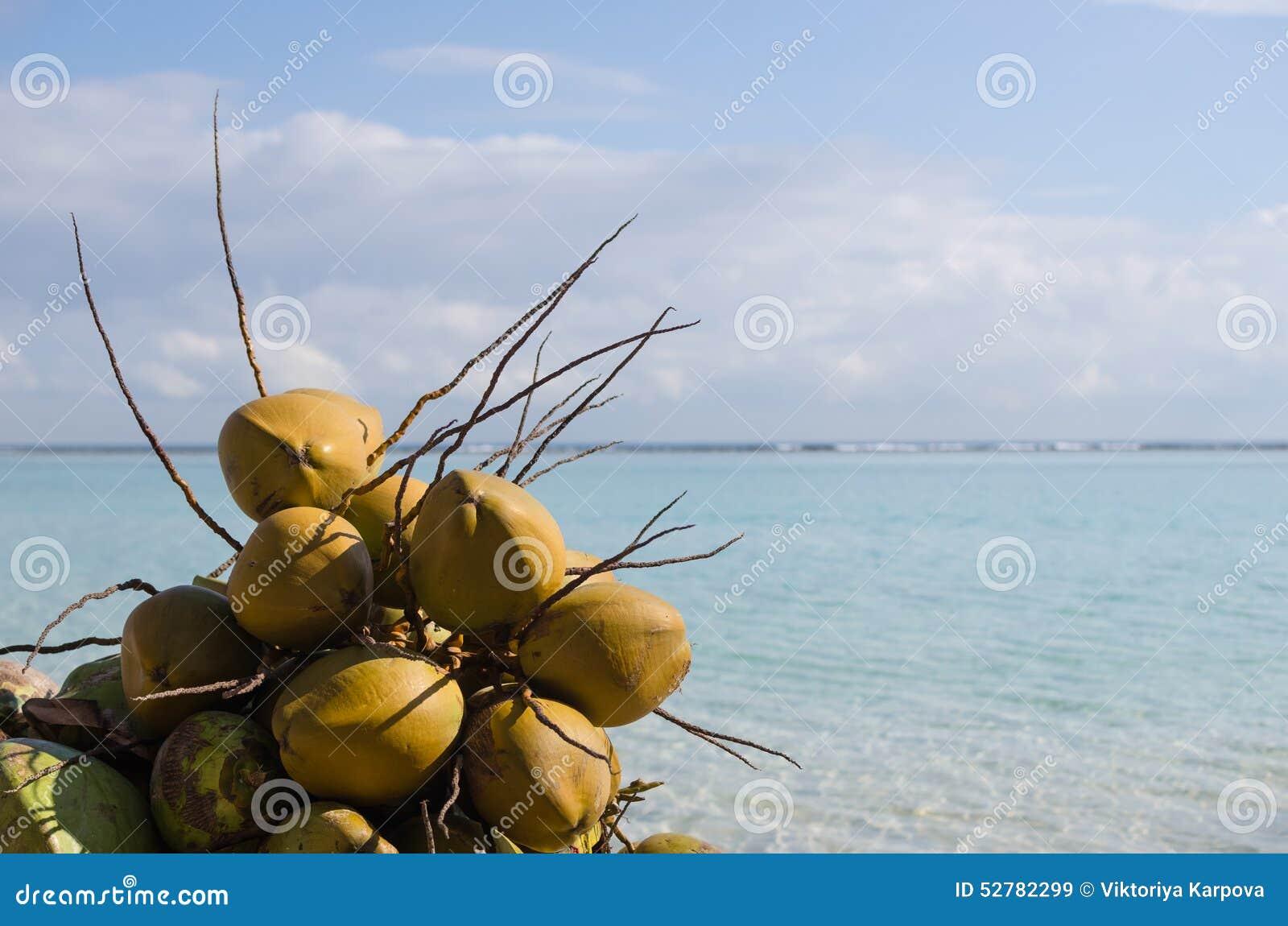 椰子, Boca奇卡海滩,多米尼加共和国,加勒比