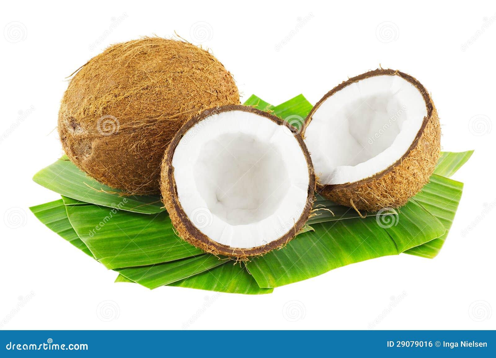 免版税库存图片: 椰子