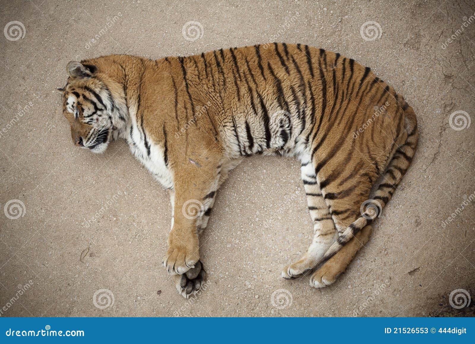 楼层休眠老虎